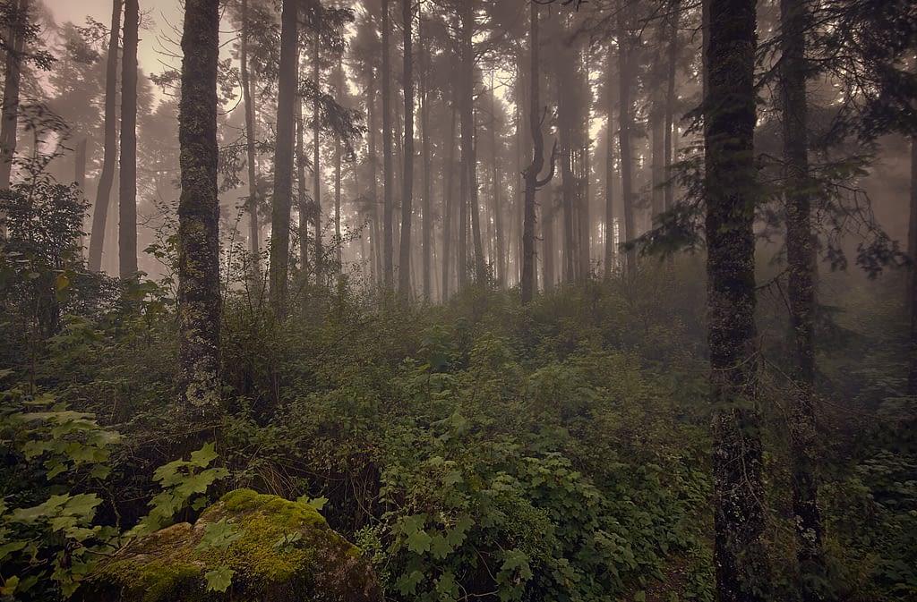 Bosque_con_niebla_Parque_Natural_el_Rey-Fotográfo-Ignacio Arcas-