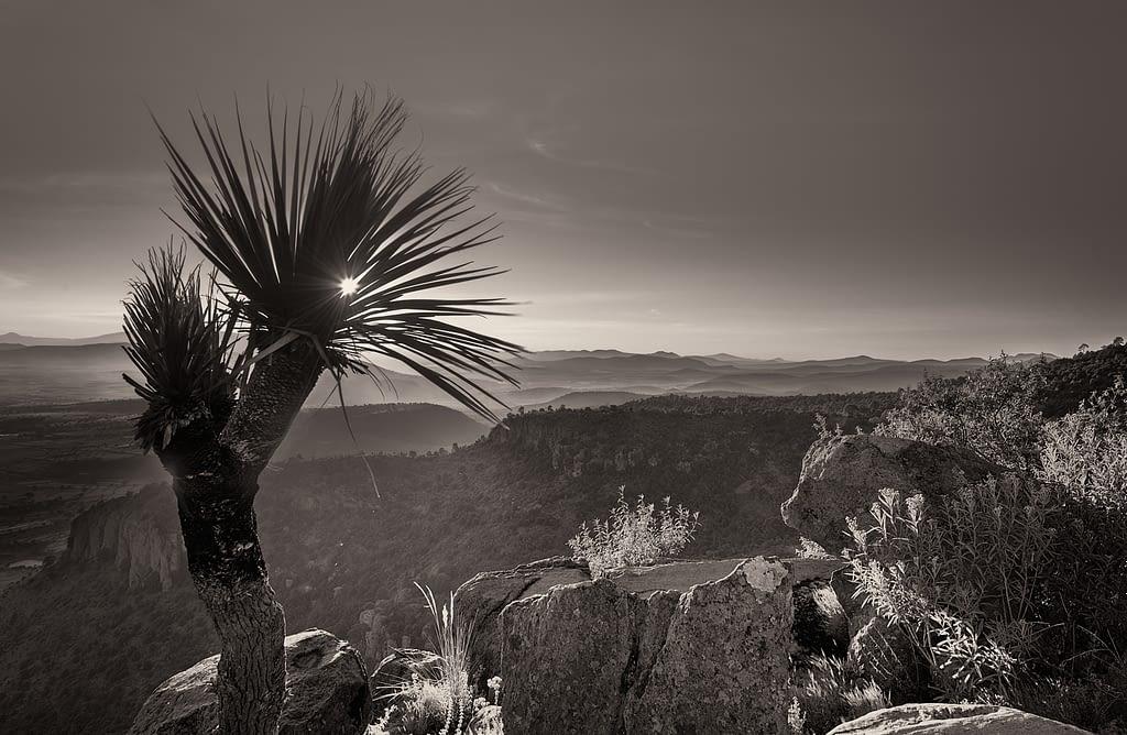 Atardecer en el Parque Natural el Rey, en Tlaxco Tlaxcala